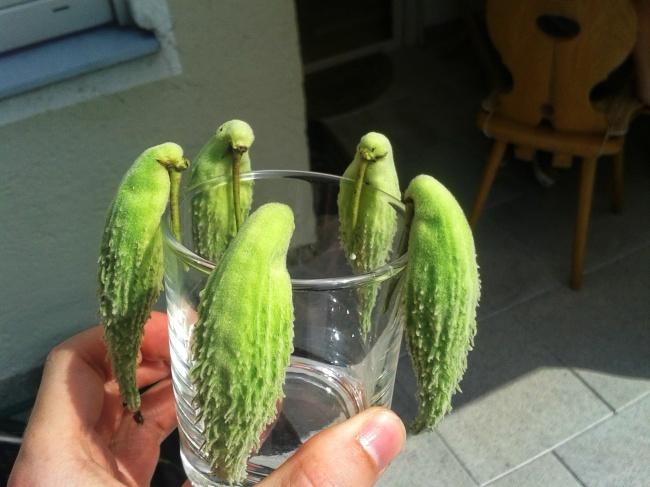 frutta-verdure-strane-forme-illusioni-ottiche-16