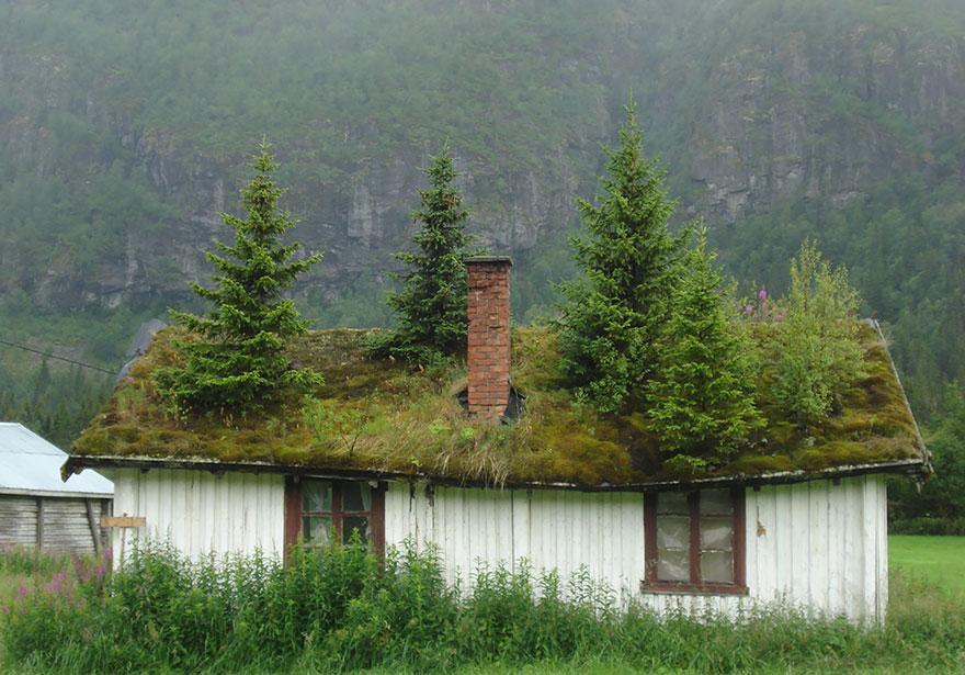 immagini-case-tetti-erba-scandinavia-09