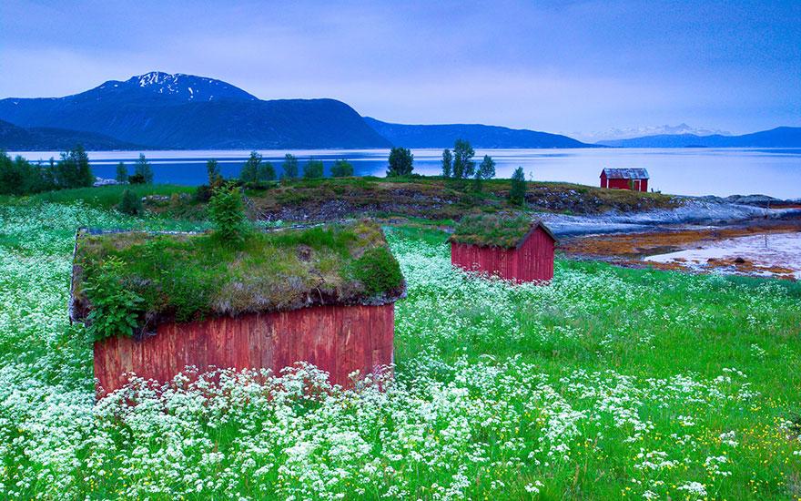 immagini-case-tetti-erba-scandinavia-12