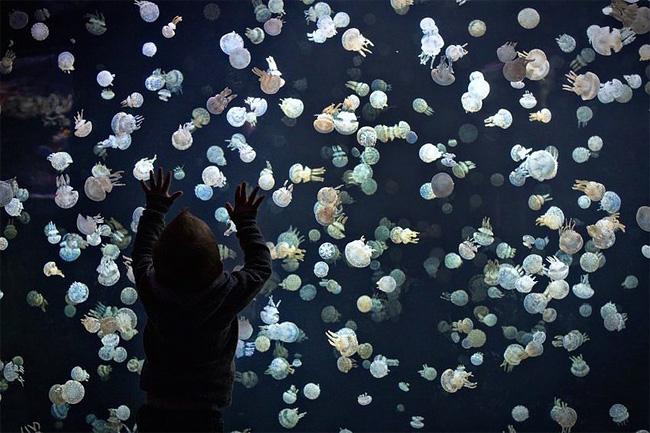 immagini-meduse-vancouver-aquarium-2