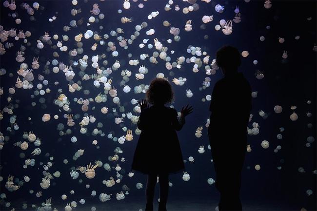 immagini-meduse-vancouver-aquarium-3