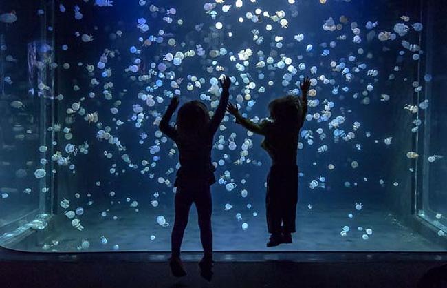 immagini-meduse-vancouver-aquarium-6