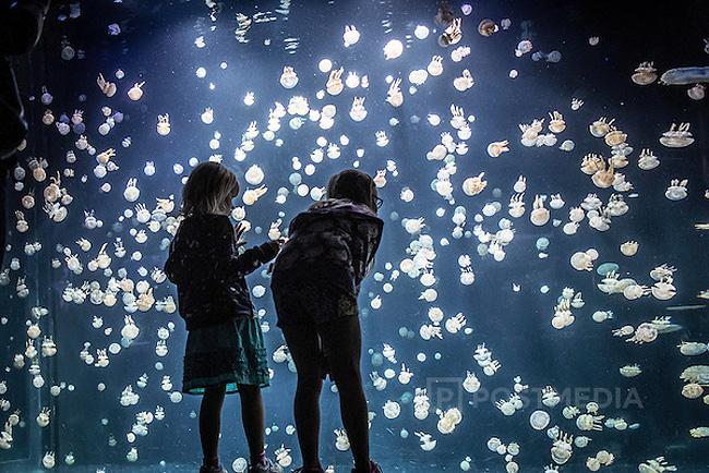 immagini-meduse-vancouver-aquarium-8