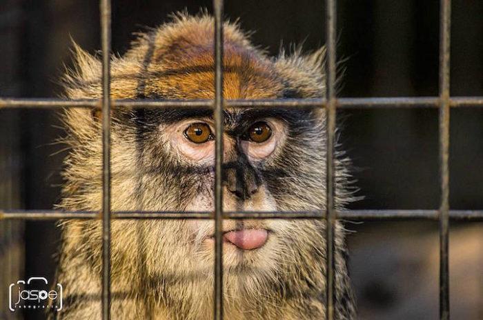 zoo-buenos-aires-libera-animali-dopo-140-anni-1
