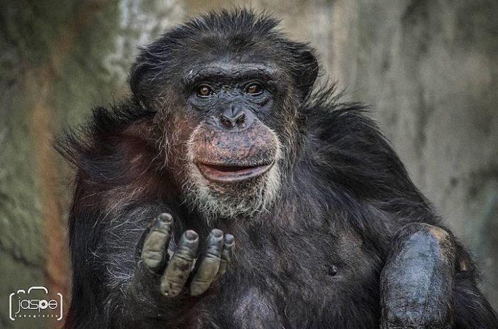 zoo-buenos-aires-libera-animali-dopo-140-anni-2