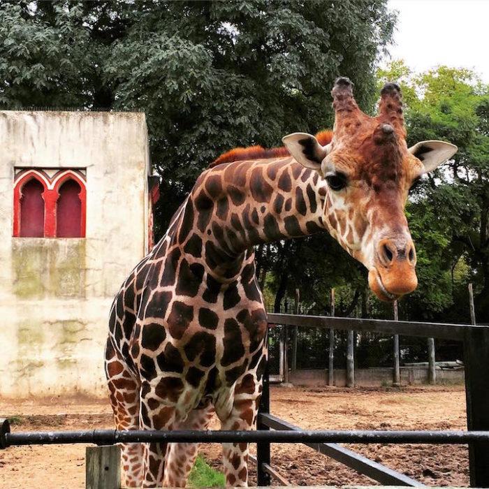 zoo-buenos-aires-libera-animali-dopo-140-anni-3