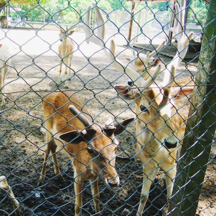 zoo-buenos-aires-libera-animali-dopo-140-anni-4
