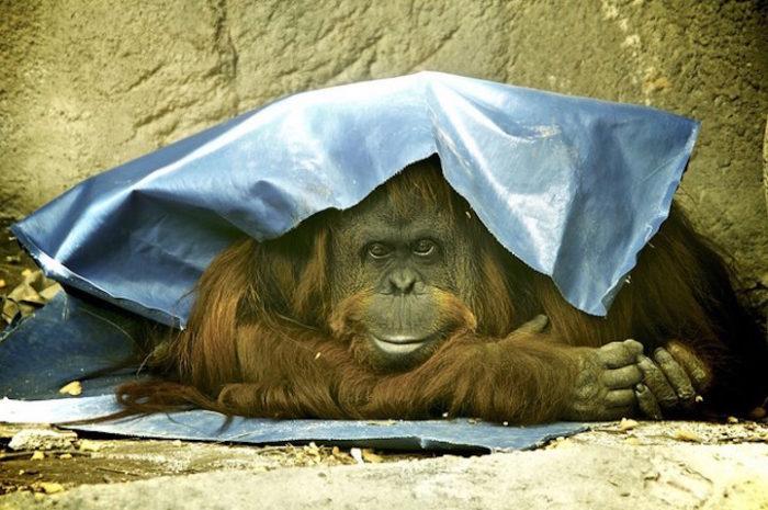zoo-buenos-aires-libera-animali-dopo-140-anni-5