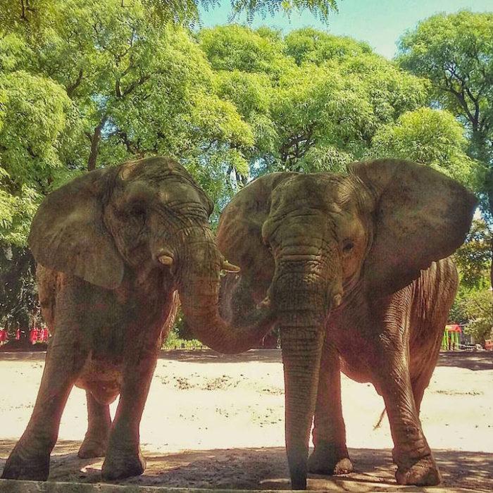 zoo-buenos-aires-libera-animali-dopo-140-anni-6