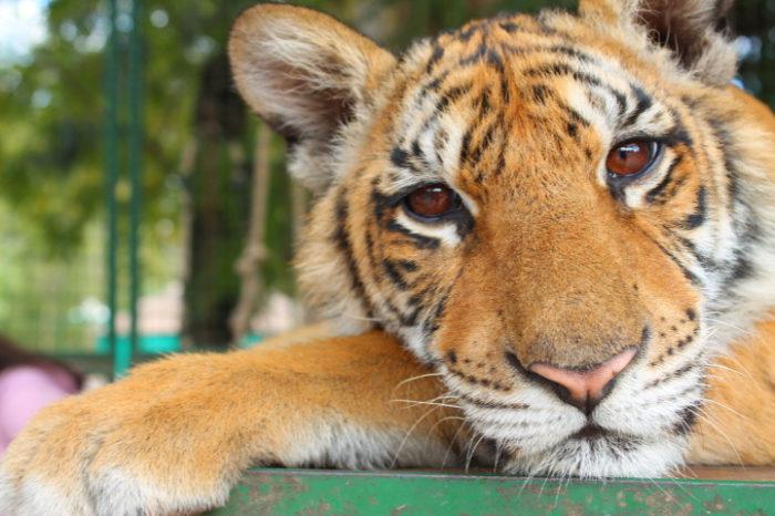 zoo-buenos-aires-libera-animali-dopo-140-anni-7