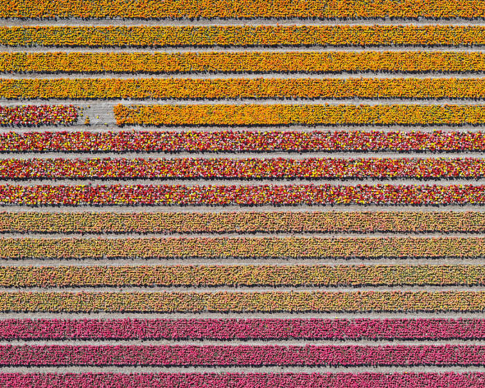 foto-aeree-campi-tulipani-olanda-bernhard-lang-01