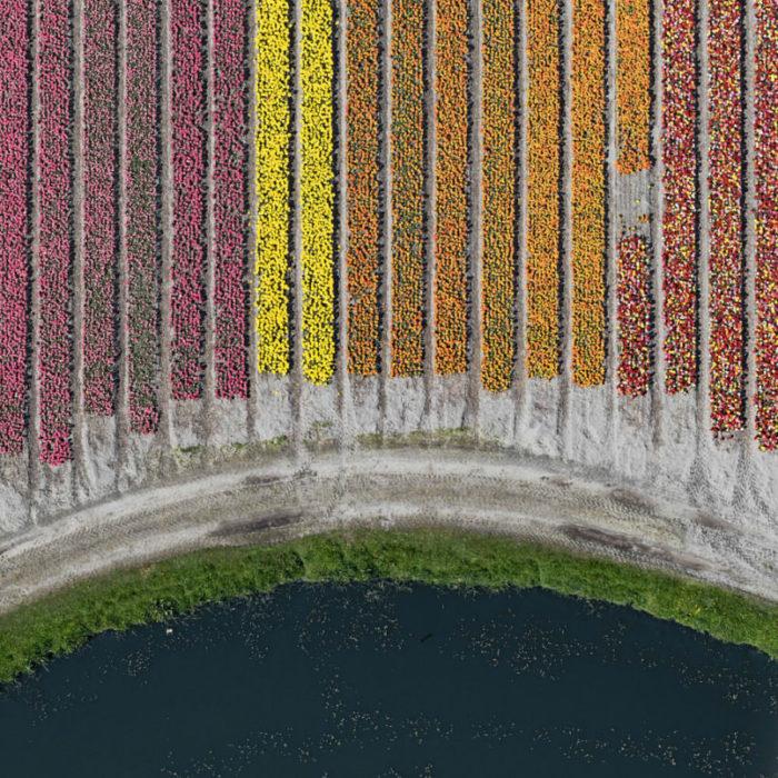 foto-aeree-campi-tulipani-olanda-bernhard-lang-02