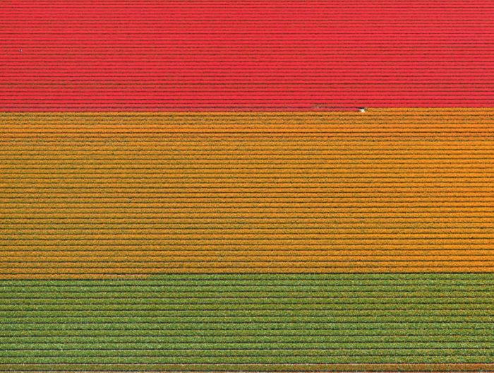 foto-aeree-campi-tulipani-olanda-bernhard-lang-05