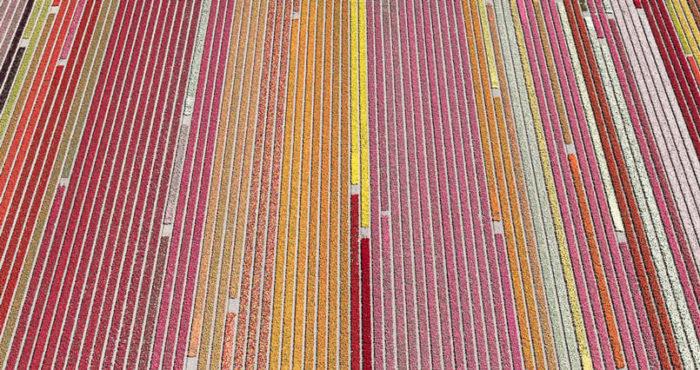 foto-aeree-campi-tulipani-olanda-bernhard-lang-07