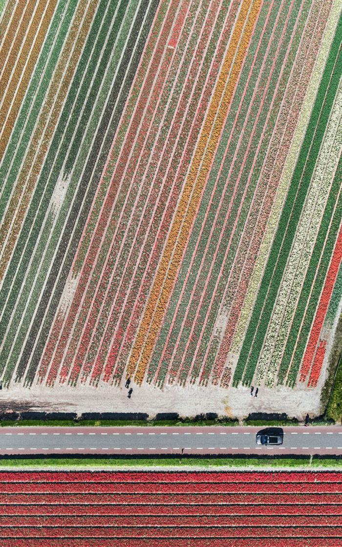 foto-aeree-campi-tulipani-olanda-bernhard-lang-08