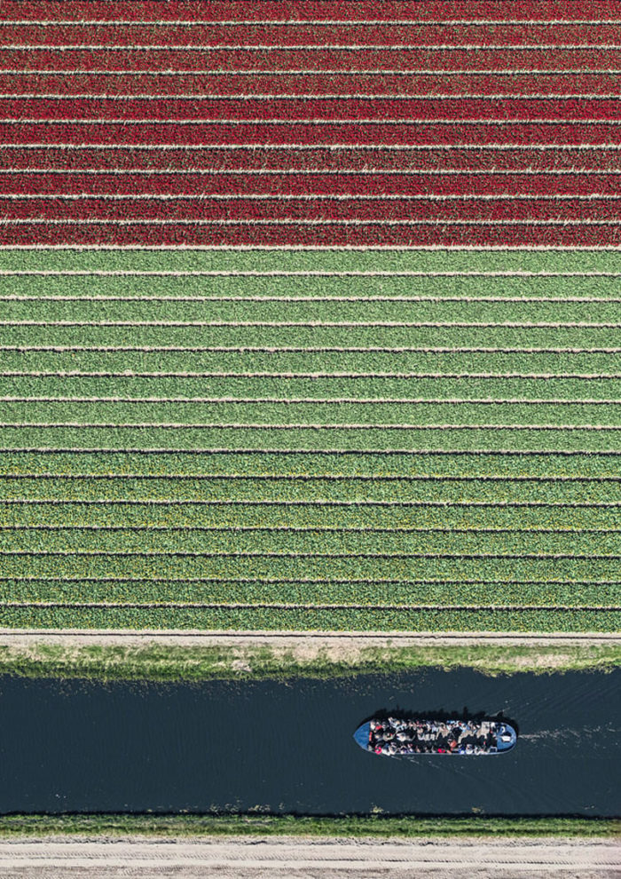 foto-aeree-campi-tulipani-olanda-bernhard-lang-09