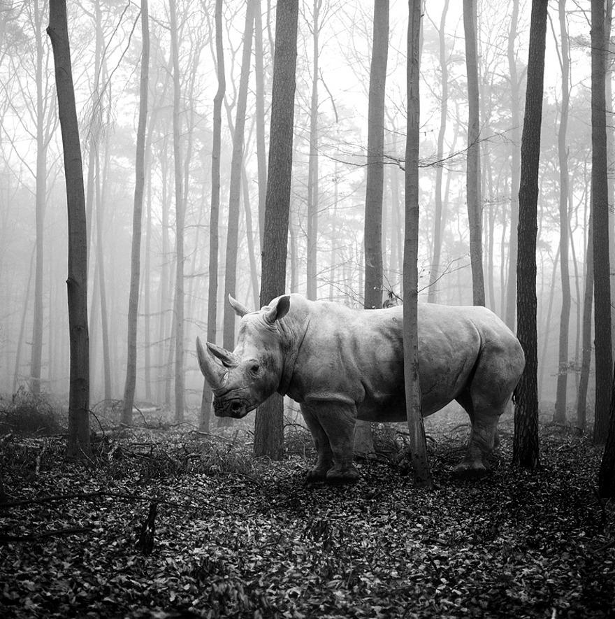 foto-animali-foresta-bianco-nero-tierwald-frank-machalowski-01