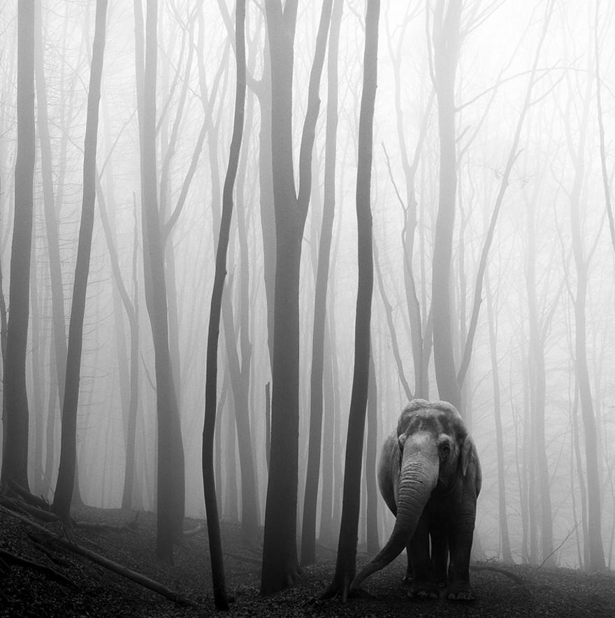 foto-animali-foresta-bianco-nero-tierwald-frank-machalowski-03