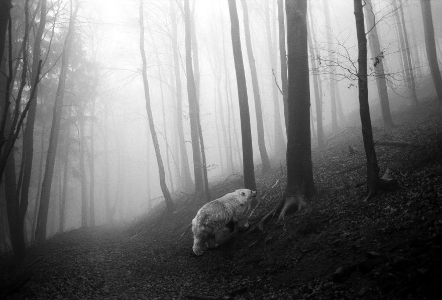 foto-animali-foresta-bianco-nero-tierwald-frank-machalowski-04