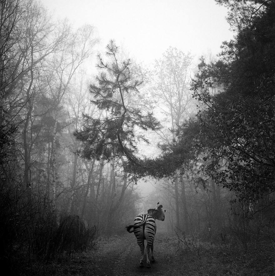 foto-animali-foresta-bianco-nero-tierwald-frank-machalowski-05