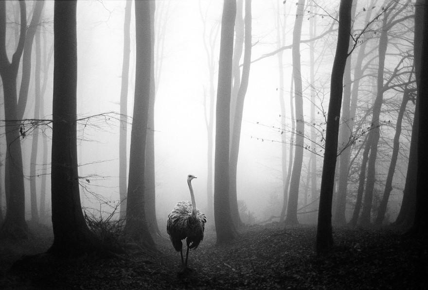 foto-animali-foresta-bianco-nero-tierwald-frank-machalowski-06