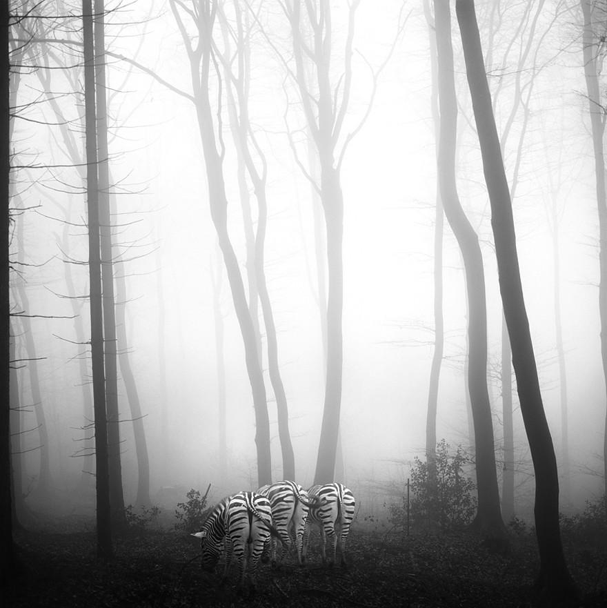 foto-animali-foresta-bianco-nero-tierwald-frank-machalowski-07