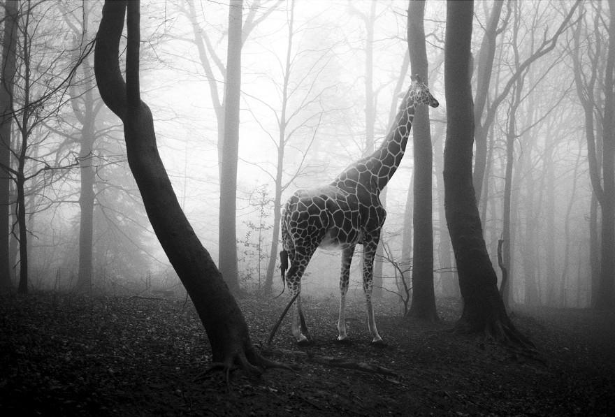 foto-animali-foresta-bianco-nero-tierwald-frank-machalowski-08