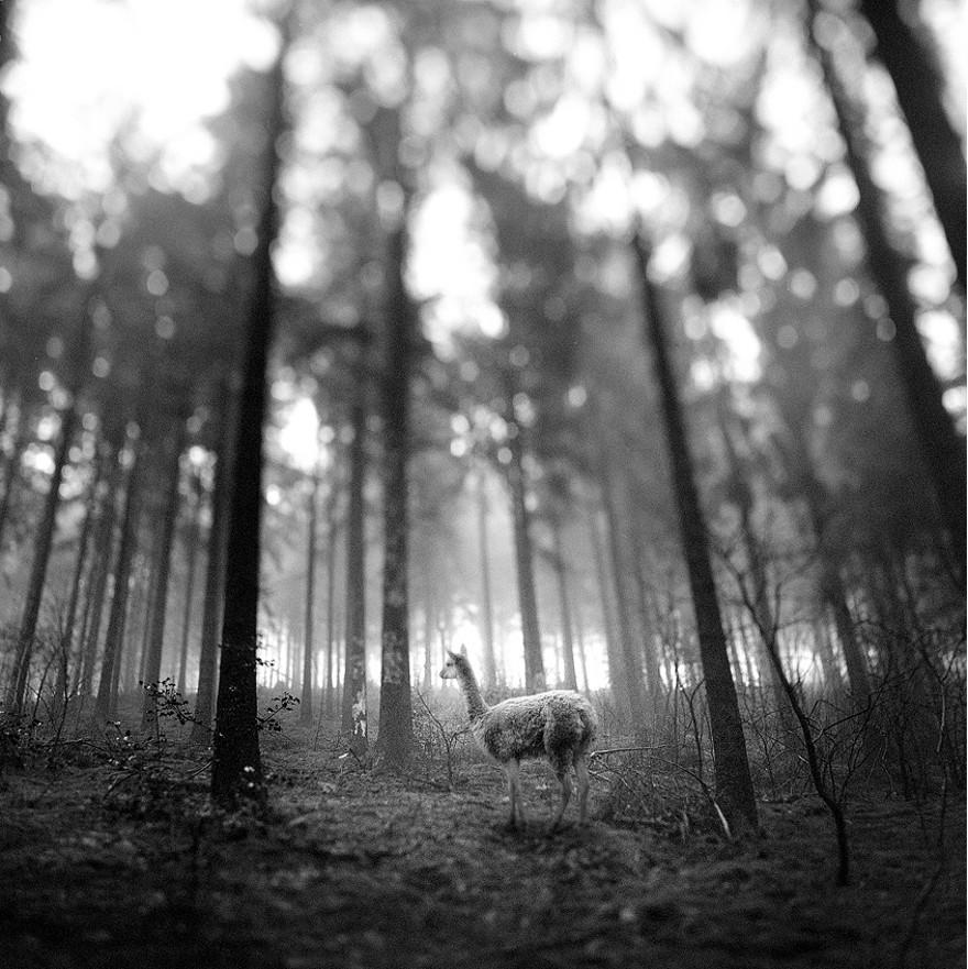 foto-animali-foresta-bianco-nero-tierwald-frank-machalowski-09