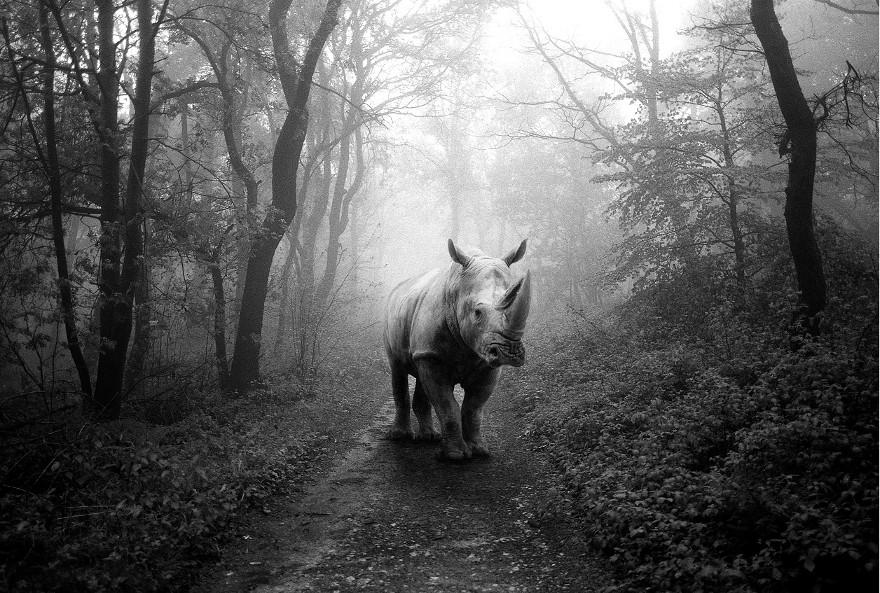 foto-animali-foresta-bianco-nero-tierwald-frank-machalowski-10
