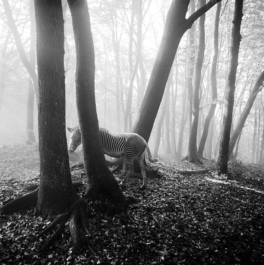 foto-animali-foresta-bianco-nero-tierwald-frank-machalowski-11