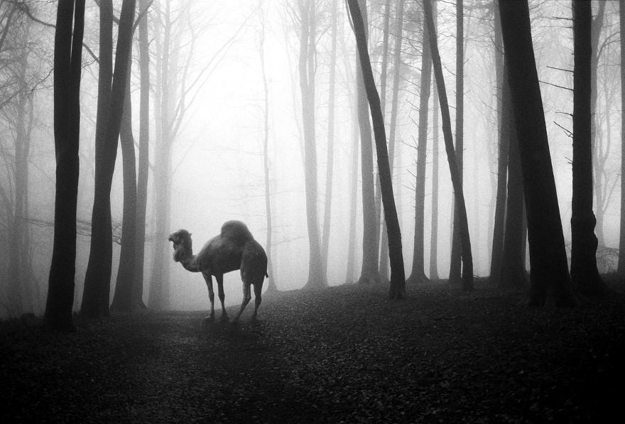 foto-animali-foresta-bianco-nero-tierwald-frank-machalowski-13