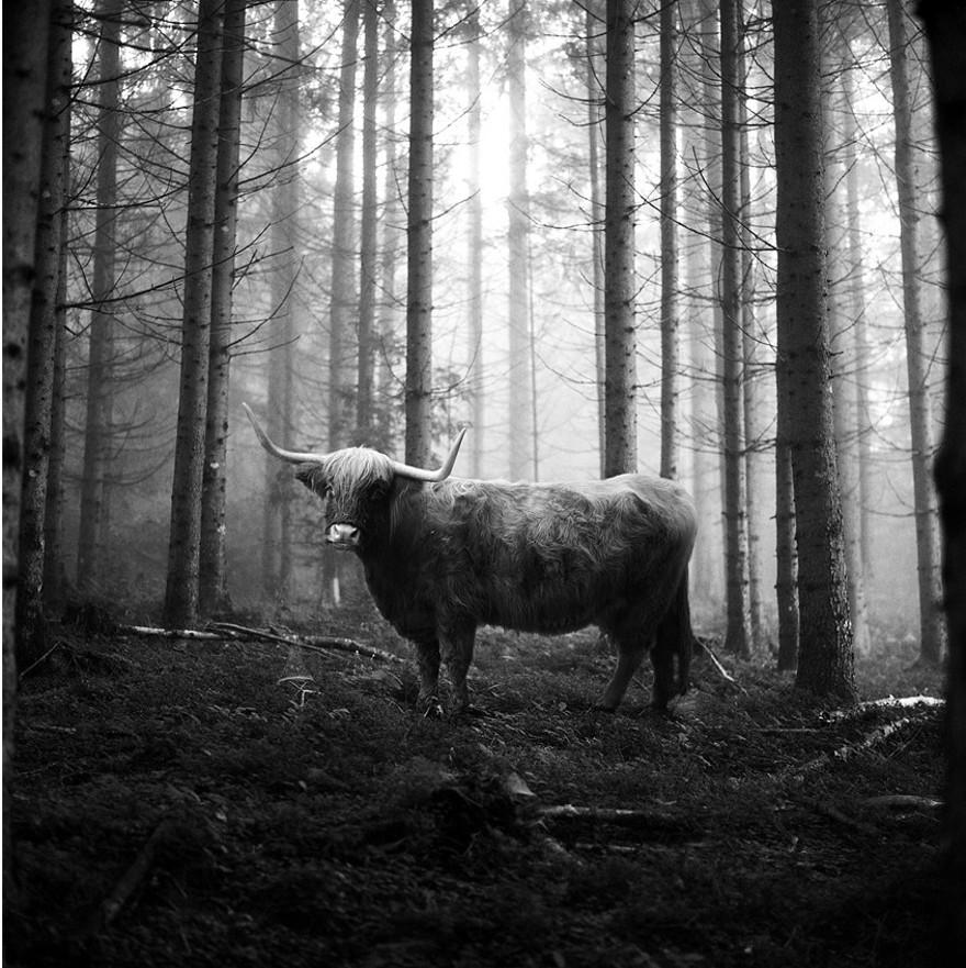 foto-animali-foresta-bianco-nero-tierwald-frank-machalowski-14