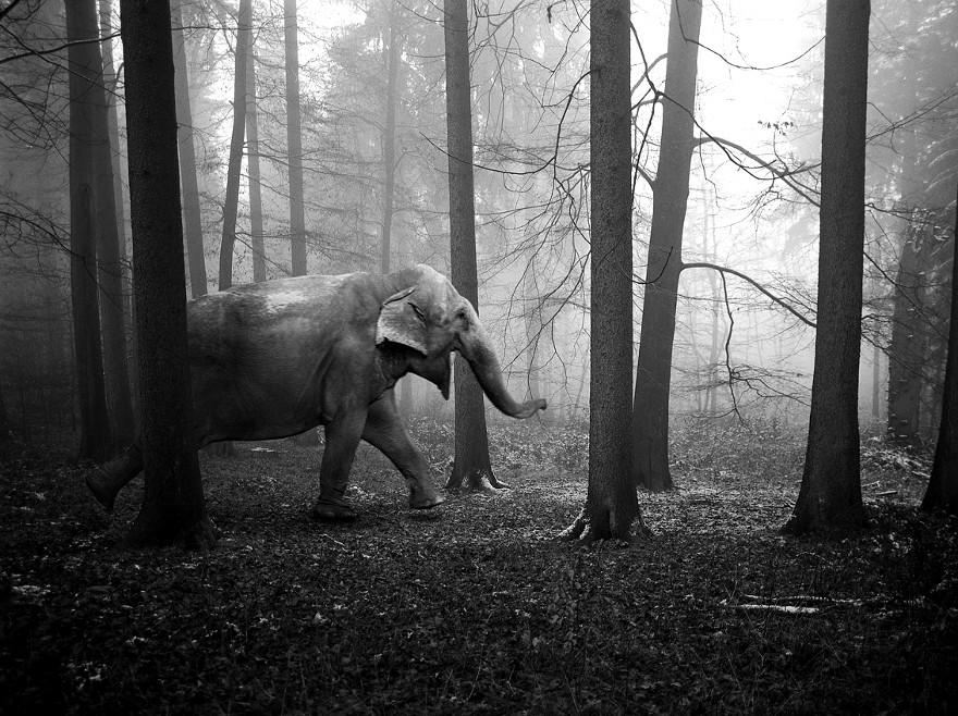 foto-animali-foresta-bianco-nero-tierwald-frank-machalowski-15