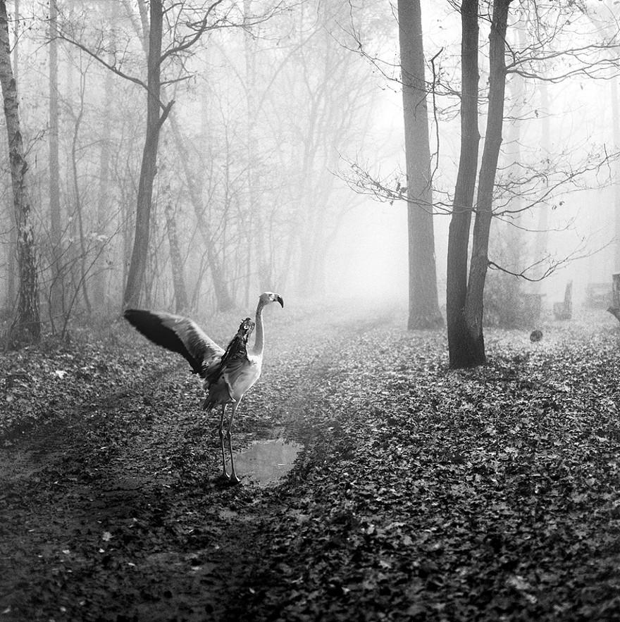 foto-animali-foresta-bianco-nero-tierwald-frank-machalowski-16