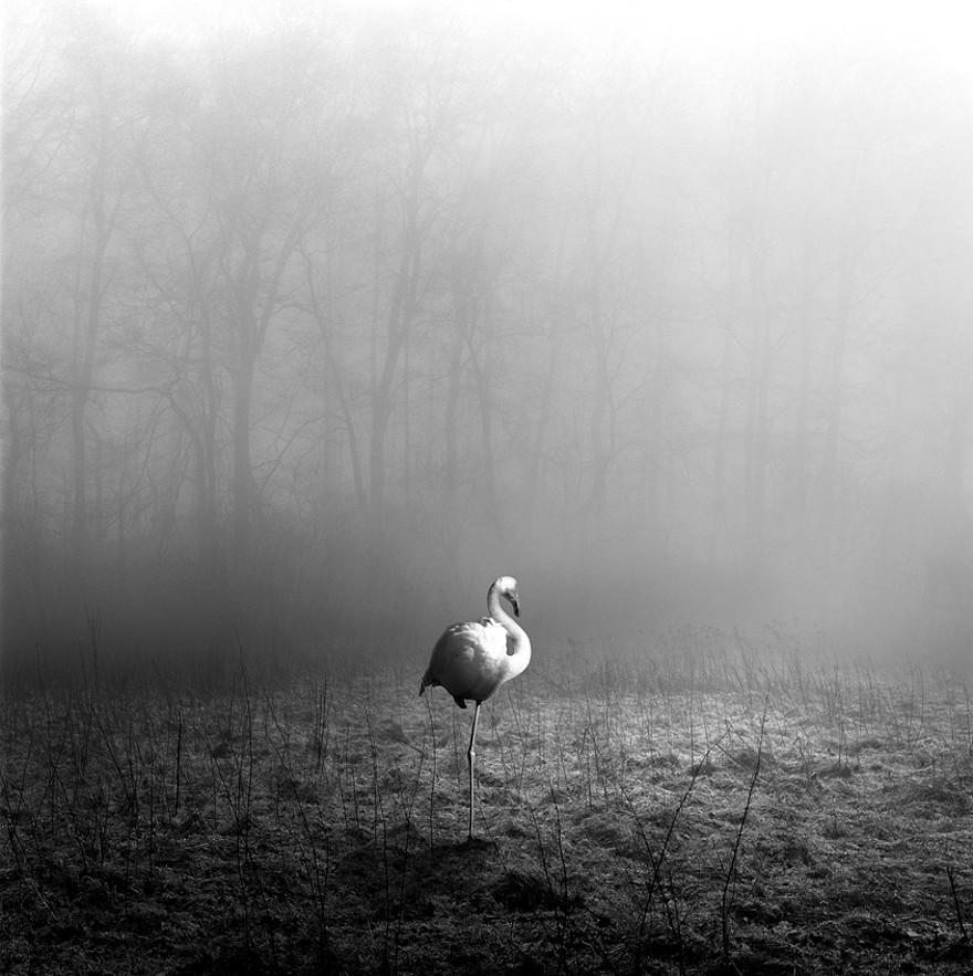 foto-animali-foresta-bianco-nero-tierwald-frank-machalowski-17