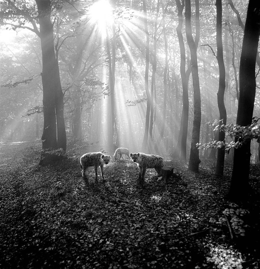 foto-animali-foresta-bianco-nero-tierwald-frank-machalowski-18