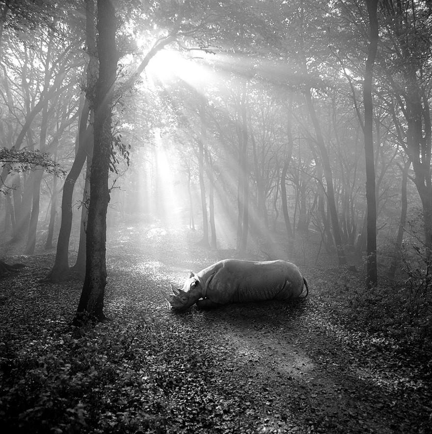foto-animali-foresta-bianco-nero-tierwald-frank-machalowski-19