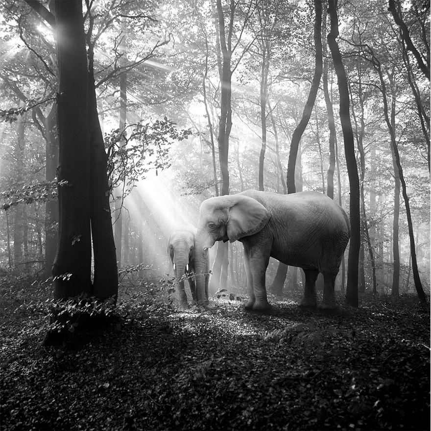 foto-animali-foresta-bianco-nero-tierwald-frank-machalowski-20