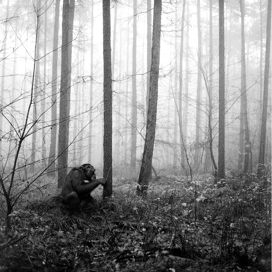 foto-animali-foresta-bianco-nero-tierwald-frank-machalowski-21