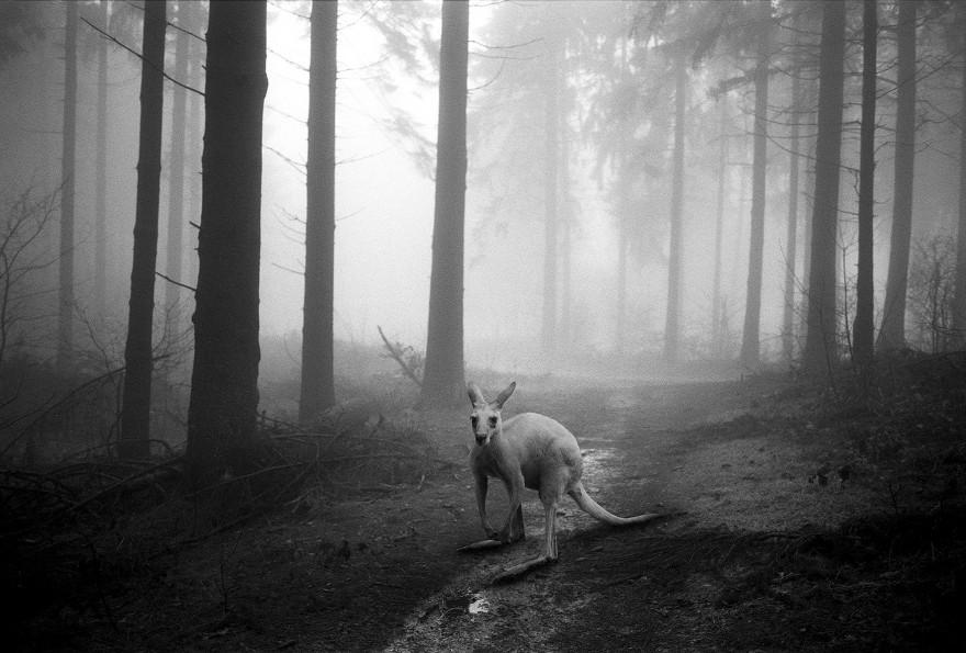 foto-animali-foresta-bianco-nero-tierwald-frank-machalowski-22