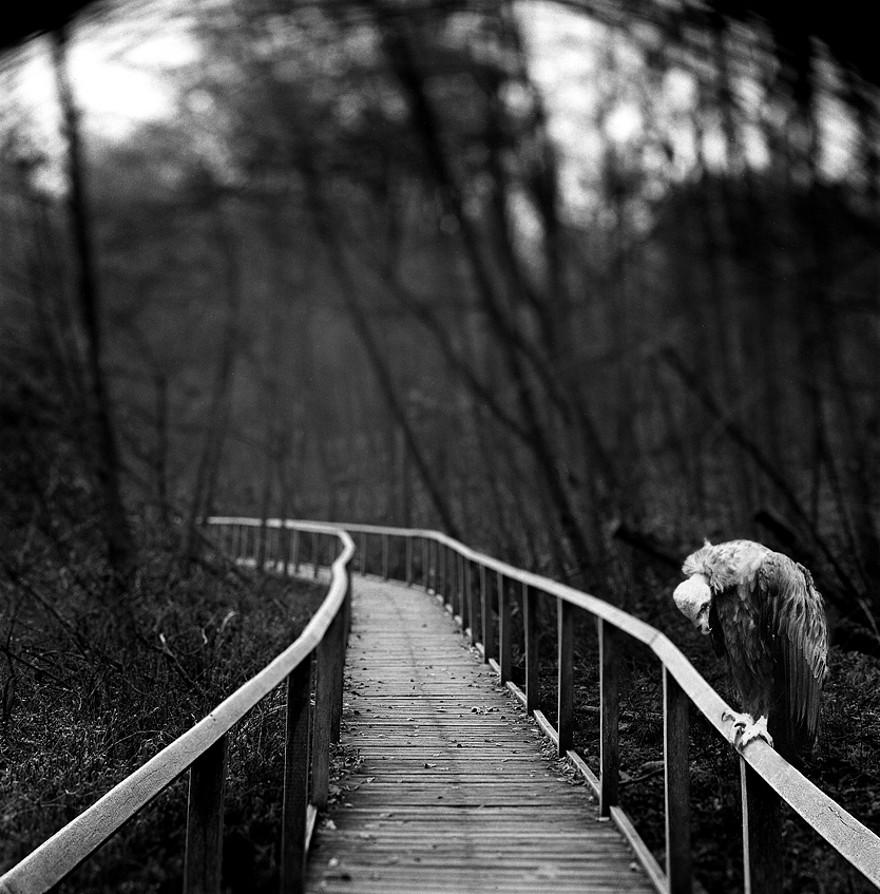 foto-animali-foresta-bianco-nero-tierwald-frank-machalowski-23