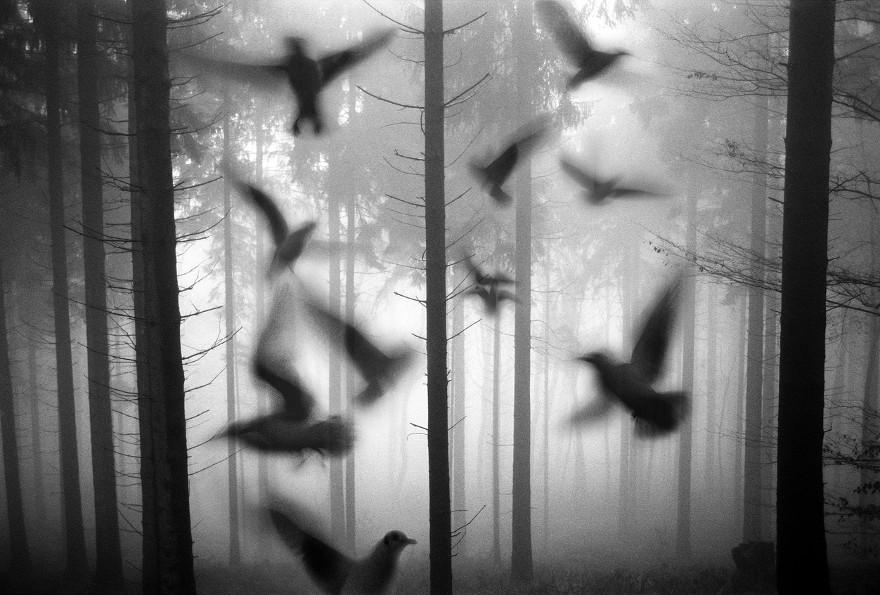 foto-animali-foresta-bianco-nero-tierwald-frank-machalowski-24