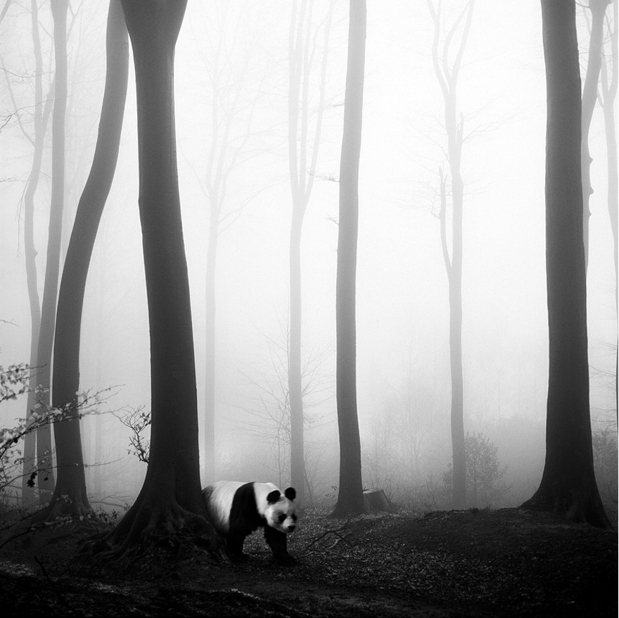 foto-animali-foresta-bianco-nero-tierwald-frank-machalowski-25