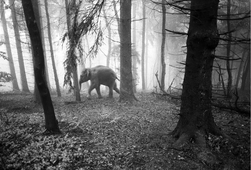 foto-animali-foresta-bianco-nero-tierwald-frank-machalowski-26