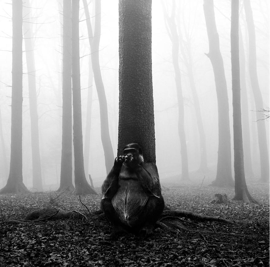 foto-animali-foresta-bianco-nero-tierwald-frank-machalowski-27