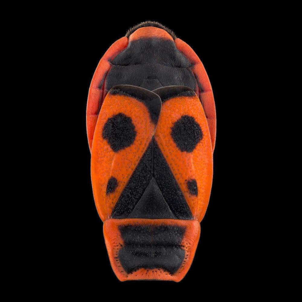 fotografia-macro-insetti-volti-mascherati-pascal-goet-3