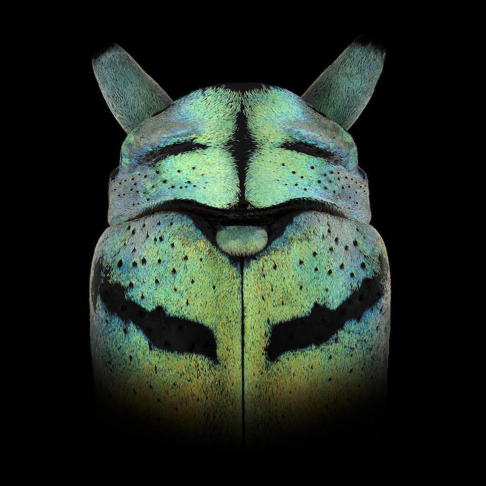 fotografia-macro-insetti-volti-mascherati-pascal-goet-4