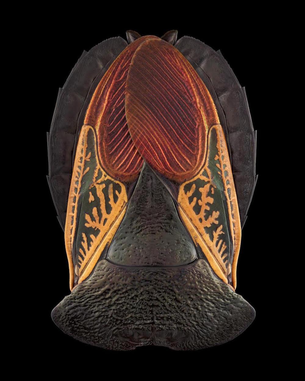 fotografia-macro-insetti-volti-mascherati-pascal-goet-5