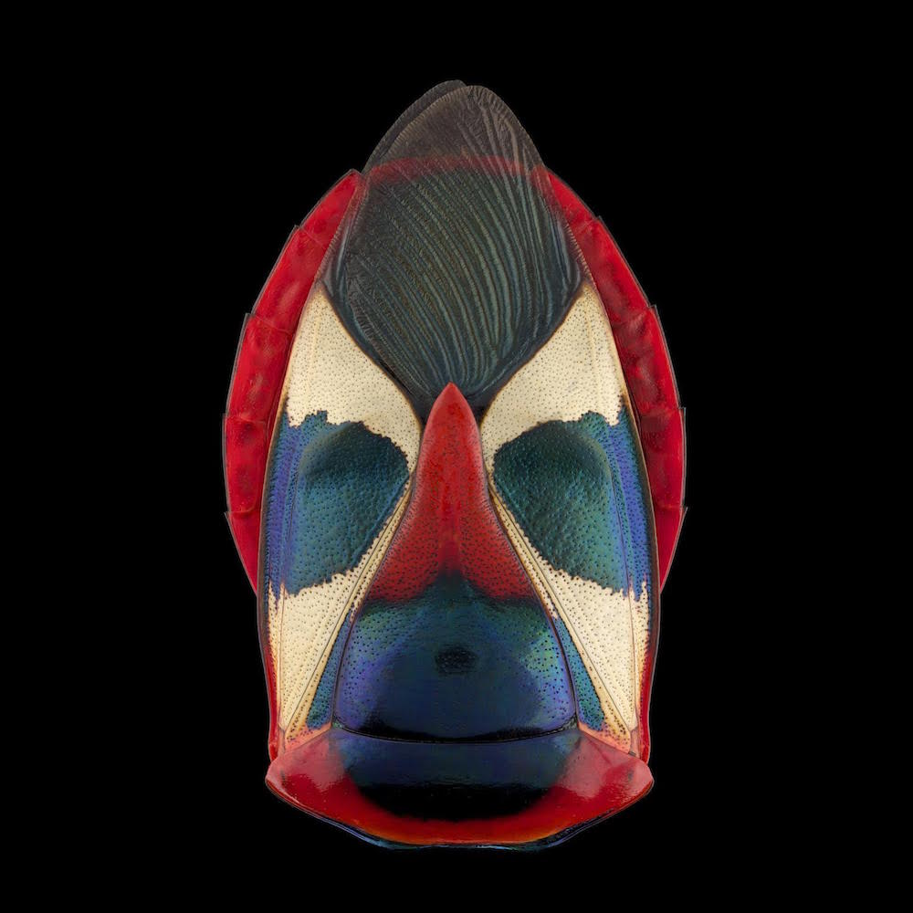 fotografia-macro-insetti-volti-mascherati-pascal-goet-8