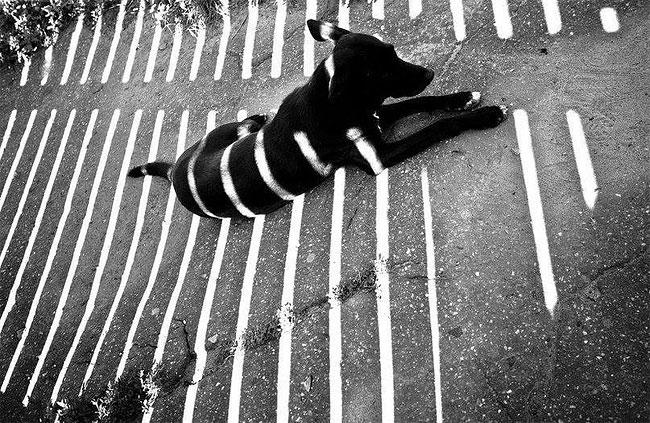 fotografie-bianco-nero-surreali-alexey-menschikov-02
